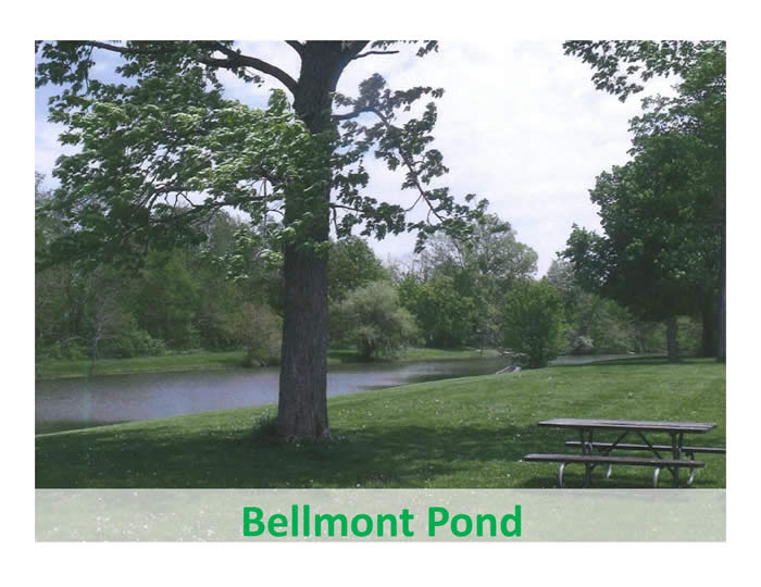 A quiet pond with a picnic table near the edge shaded by a tree